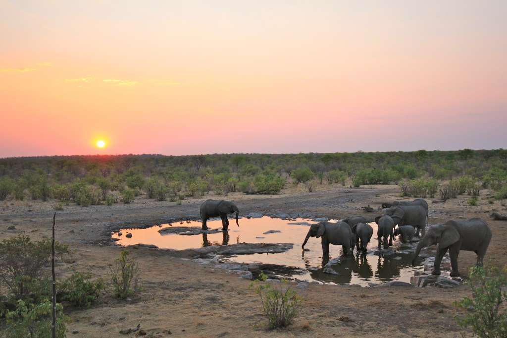 Elephants at a water hole in Etosha