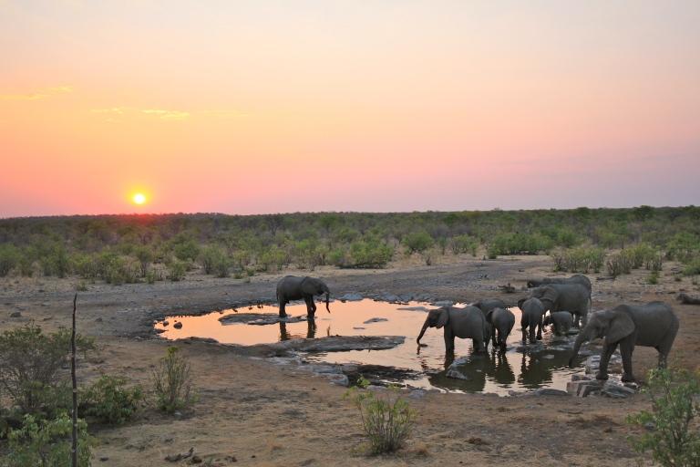 Elephants at a water hole in Etosha