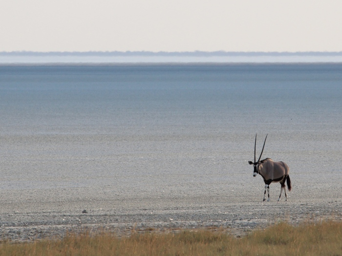 Oryx on the Etosha Pan