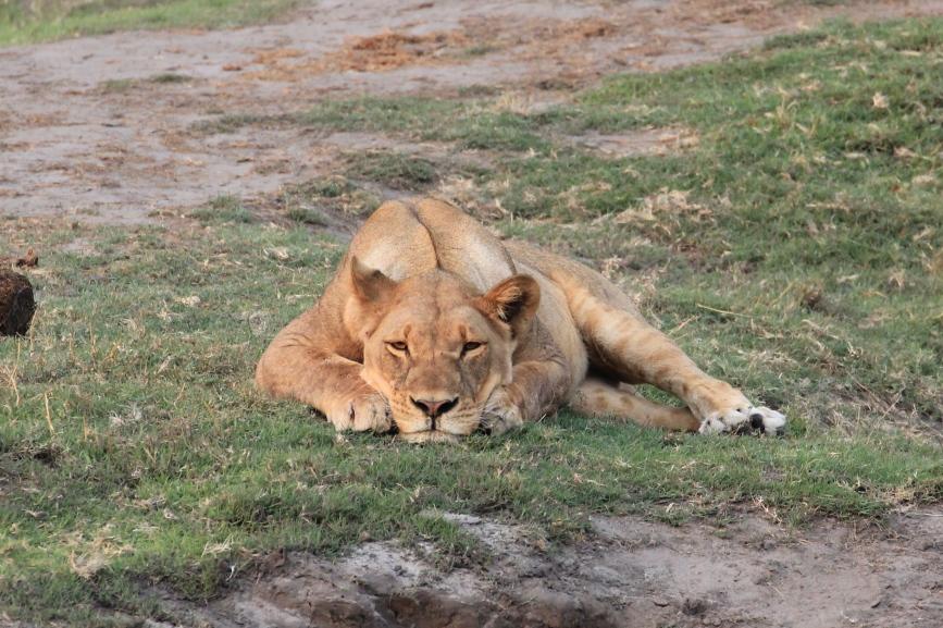 Chobe National Park, Botswana