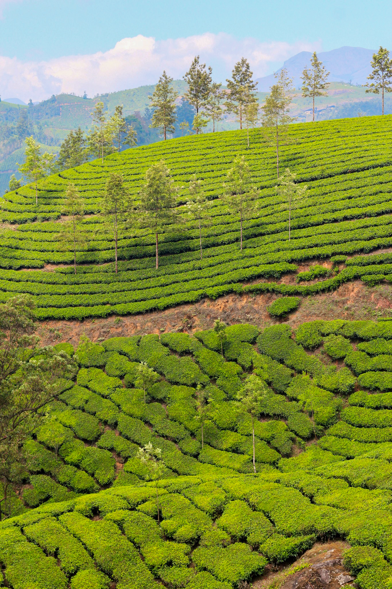 The tea plantations of Munnar in the state of Kerala. The state's motto, God's own country, is apt.