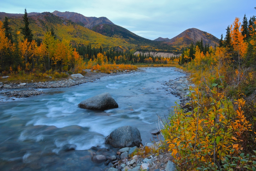 Fall colors on the Savage River, Denali National Park.