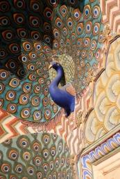 Peacock above a doorway, Jaipur