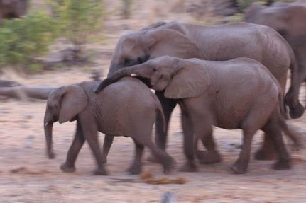 Halali waterhole at sunset with elephants