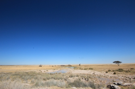 plains of Etosha