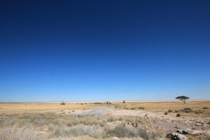 plains of Etosha