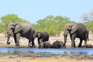 Rietfontein Waterhole is great in the afternoon when the light is perfect and the elephants are active.