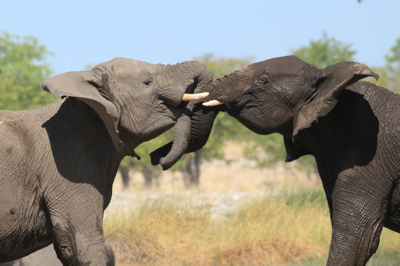 etosha essay Guide to help you plan your visit to etosha national park, namibia: getting there, planning, accomodation check out my photo essays on the animals of etosha.