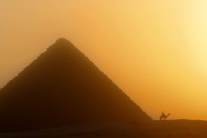 A camel and Pyramid at sunset.