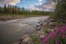RIley Creek with Dwarf Fireweed