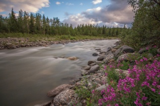 RIley Creek with Dwarf Fireweed