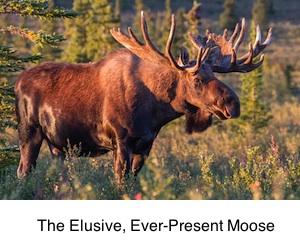 Mooselink