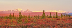 Autumn in Denali
