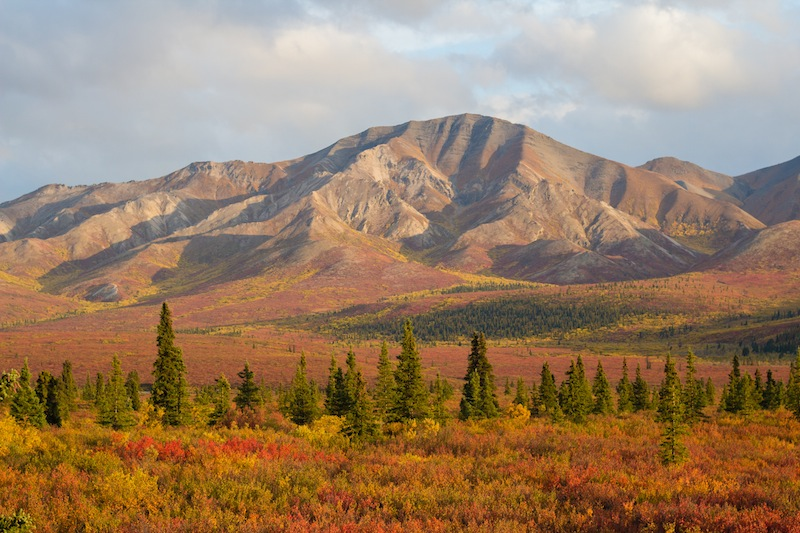 Autumn colors at mile 9 of the Denali Park Road.