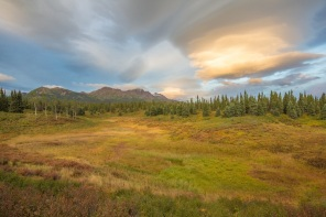 A meadow in Denali National Park along the Parks Highway.