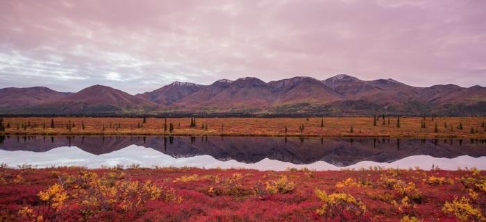 Fall Colors at Broad Pass