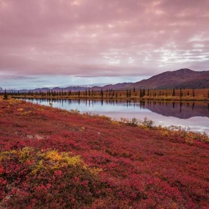Fall colors and lake at Broad Pass