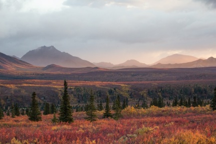 Red tundra in Denali