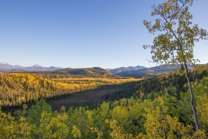 Denali Fall colors, Meadow View Trail
