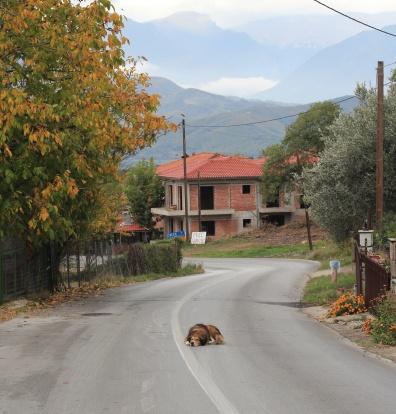 Greece Meteora Kastraki Dog