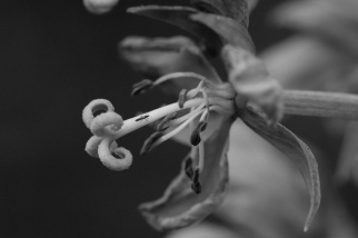 Insect on stamen