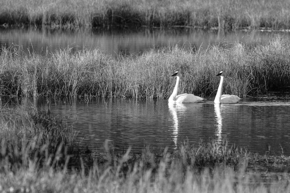 Denali Highway marshland