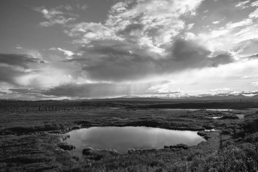 Denali Highway Pond