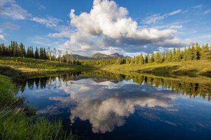 Mirror Meadow