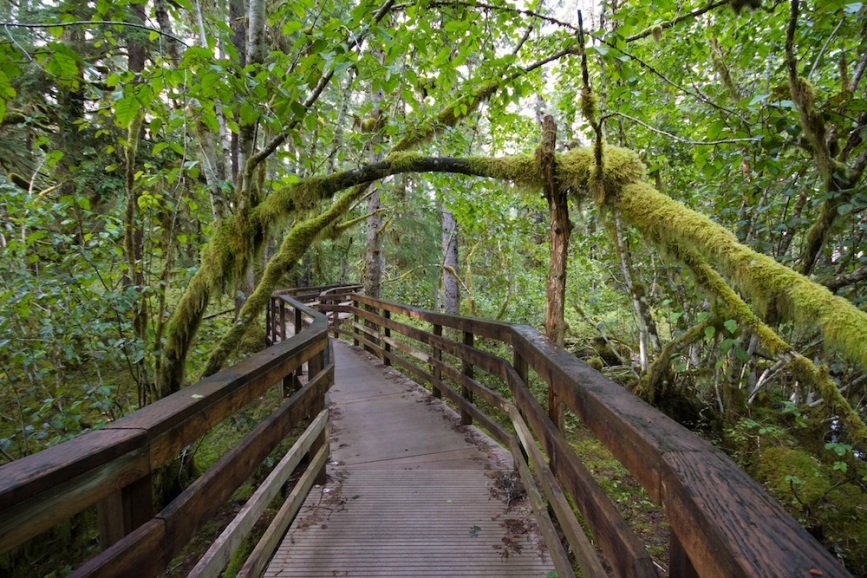 Forest loop trail Glacier Bay