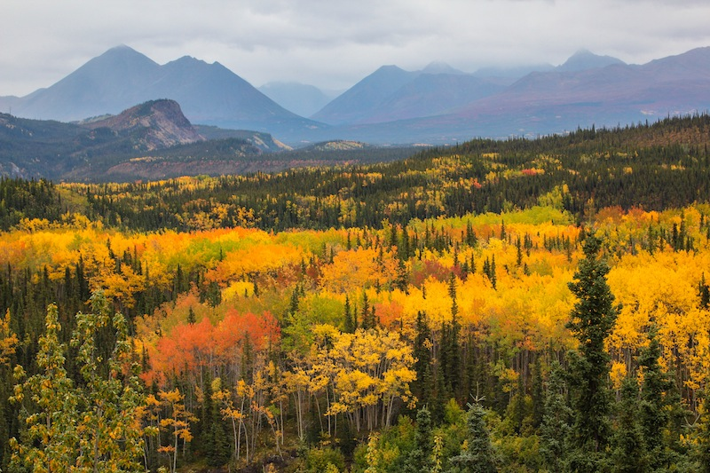 Yanert Valley in the fall.