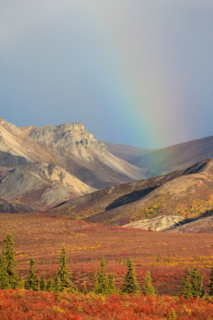 Denali Tundra in the fall, with rainbow
