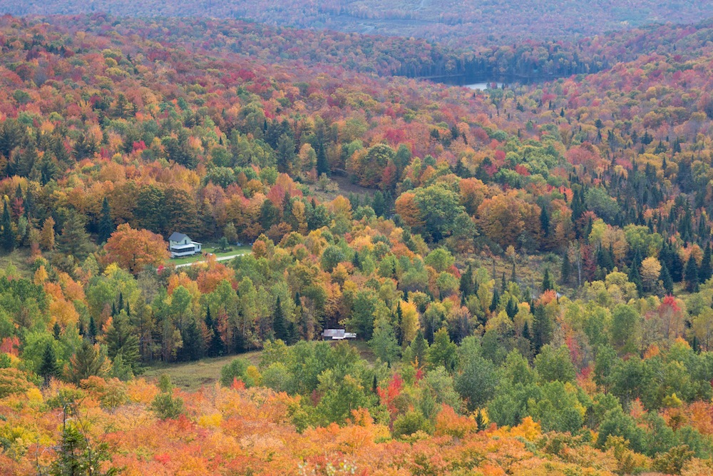 Vermont Peak Foliage