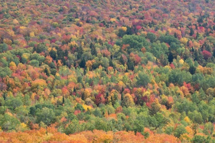 Dazzling fall foliage in Vermont