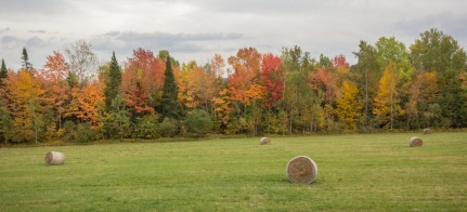 Hay bales in Vermont