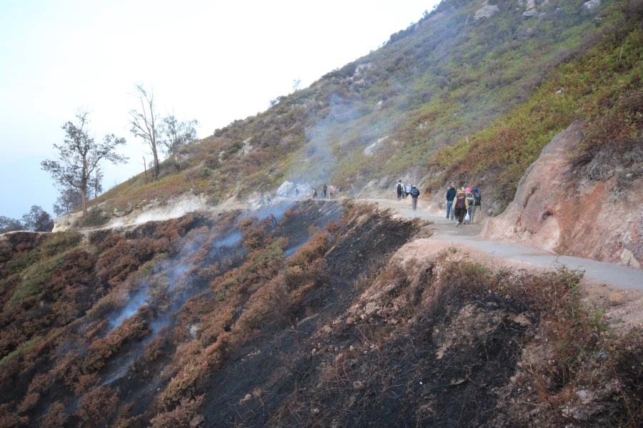Forest fire Ijen