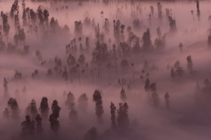 Bromo fog in trees