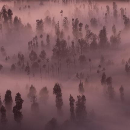 Bromo fog in trees