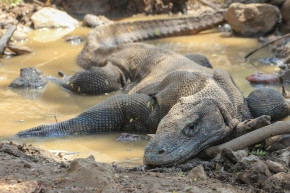 Komodo National Park: One of the Great Wildlife Spectacles on Earth