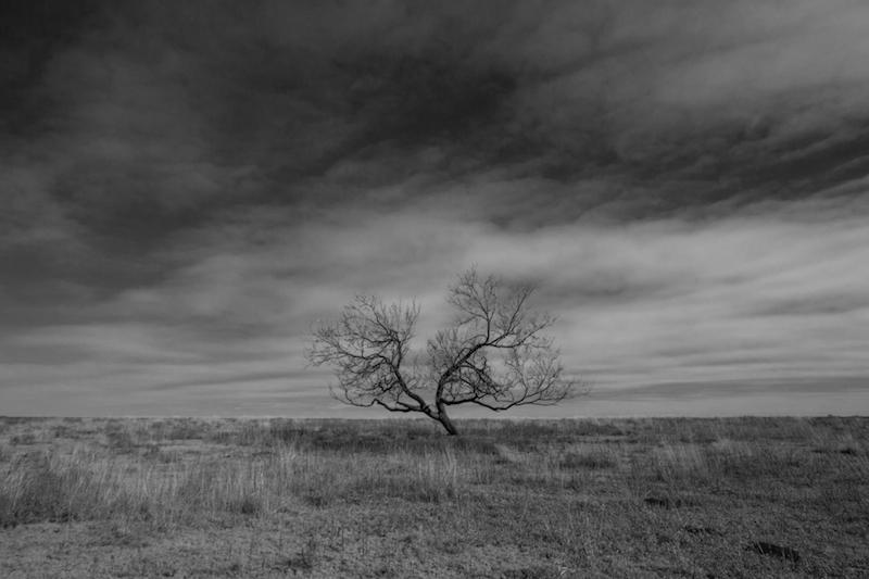 Lone tree near Quinlin