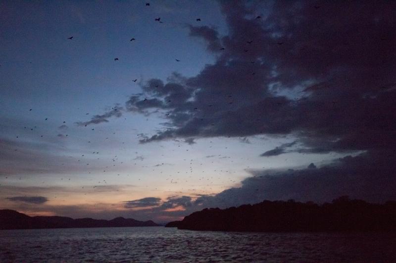 Rinca island bats