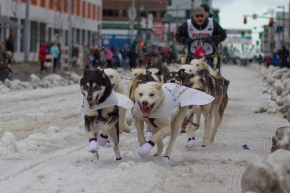 Snapshots of Fur Rondy and the Iditarod in Anchorage
