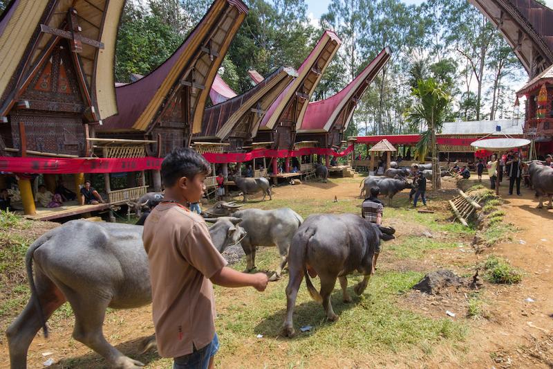 buffalo funeral