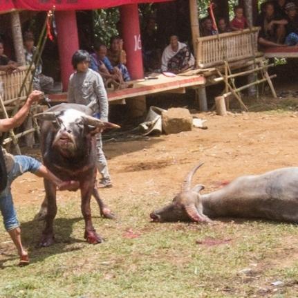 Toraja throat slit