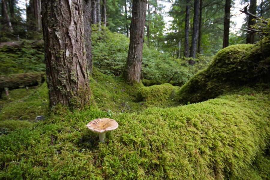 mushrooms and moss