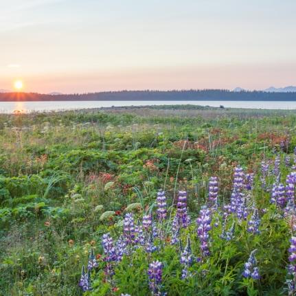 Glacier Bay Wildflowers