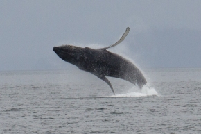 On Becoming a Whale Watching Convert