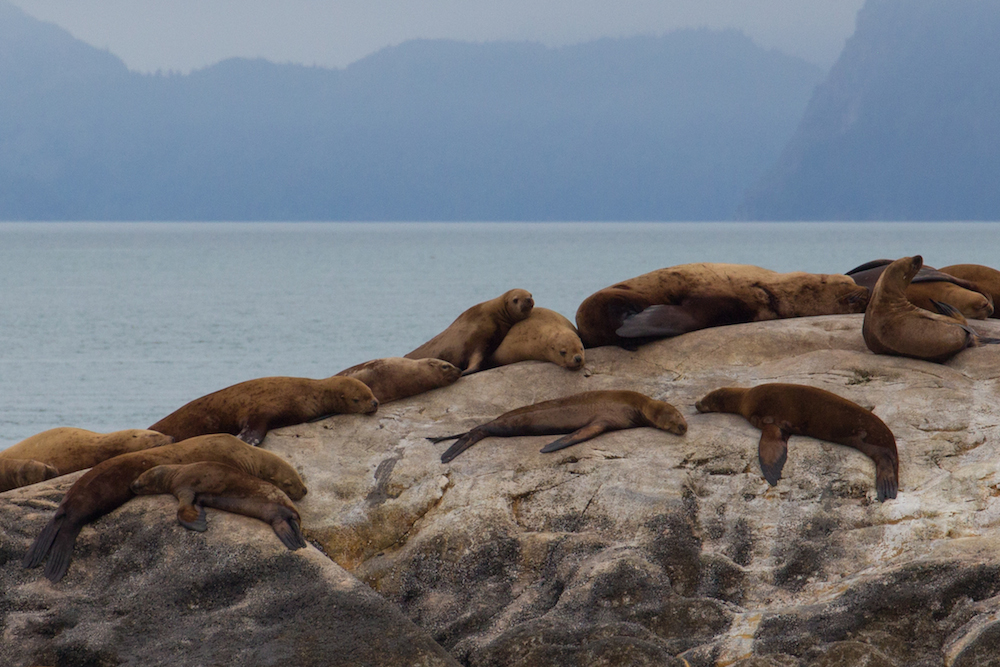 South Marble Island Sea Lions