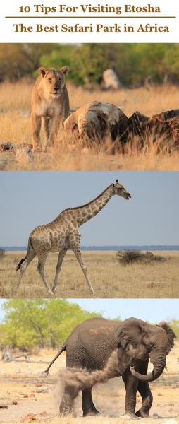 Etosha Safari Pinterest