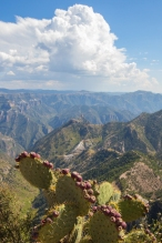 Copper Canyon and cactus