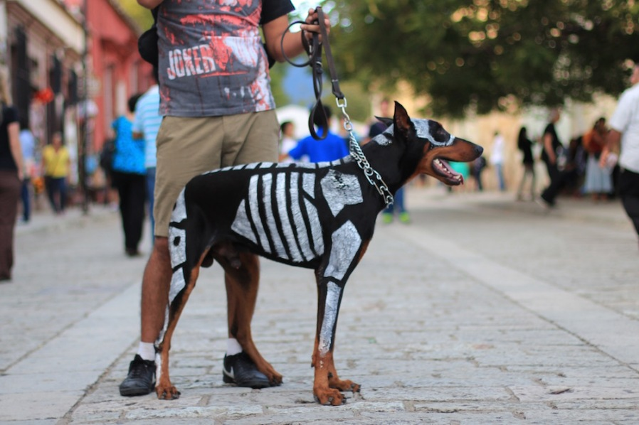 Day of the Dead Dog parade